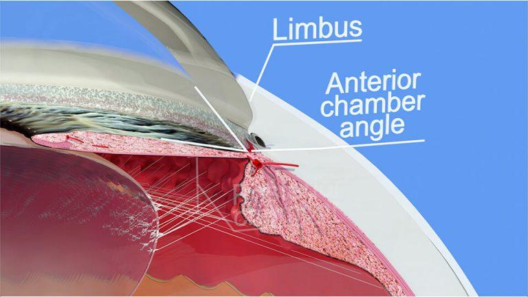 Northpoint Eye Care - Eye Anatomy - Anatomy Part 3