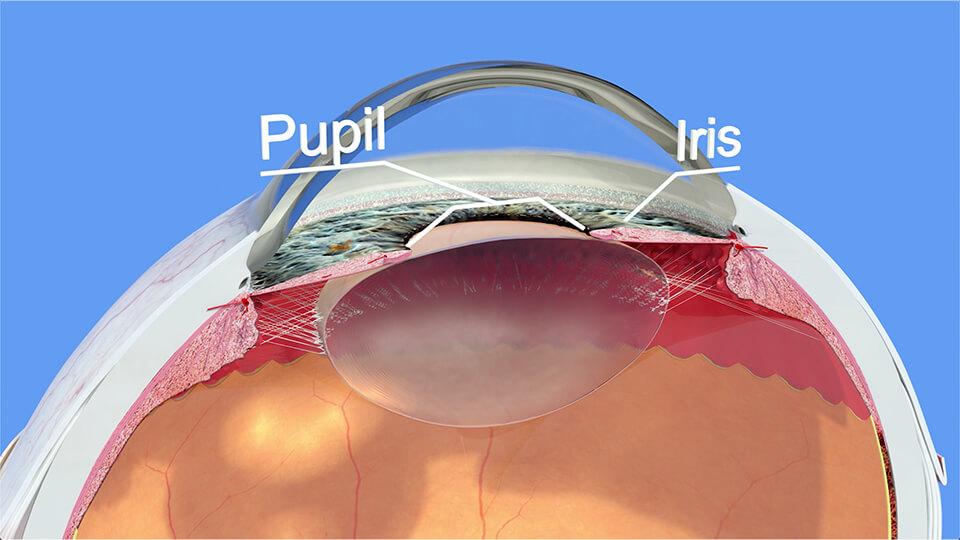 Northpoint Eye Care - Eye Anatomy - Anatomy Part 2