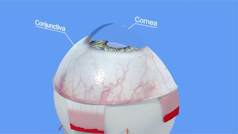 Northpoint Eye Care - Eye Anatomy - Part 1